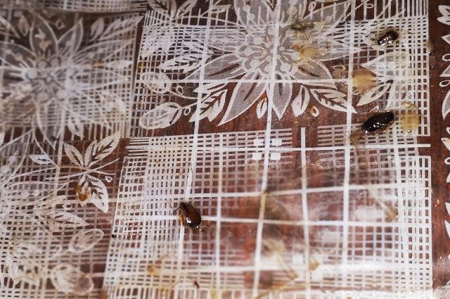 Полностью уничтожить колонию тараканов в многоквартирнике невозможно.