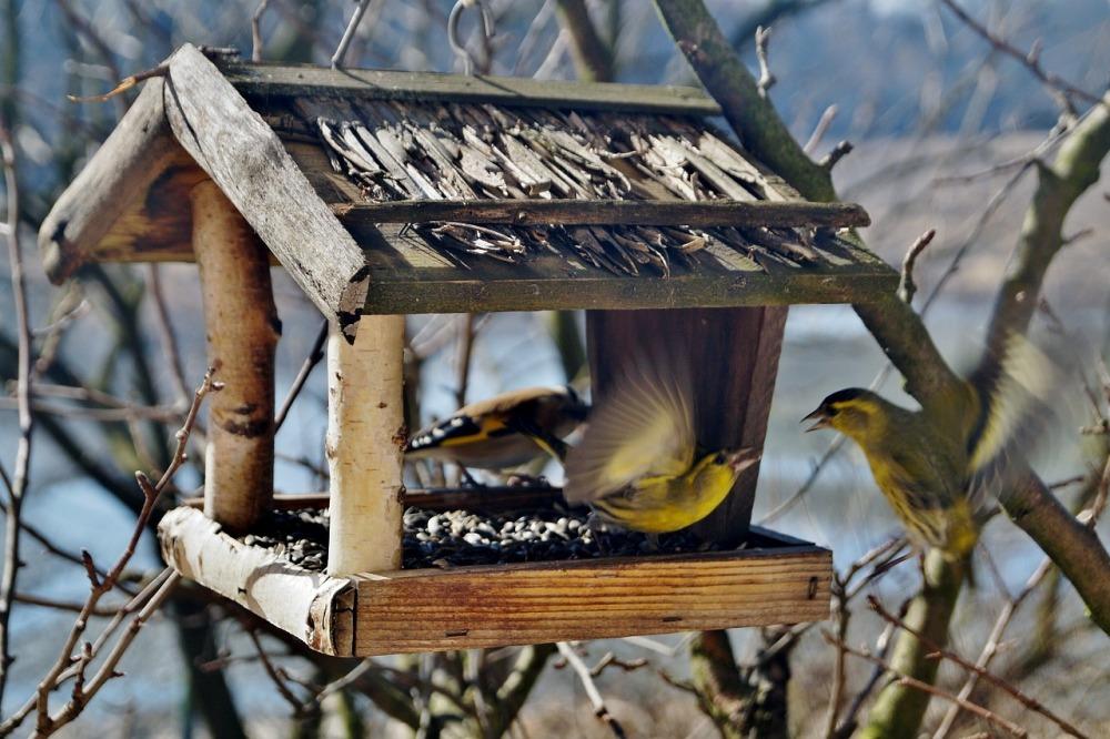 Крыша кормушки-домика убережёт и корм, и птиц от снега.
