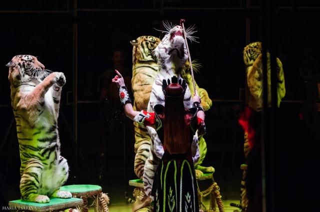 На арене тигры- партнеры артистов, а за кулисами- члены семьи.