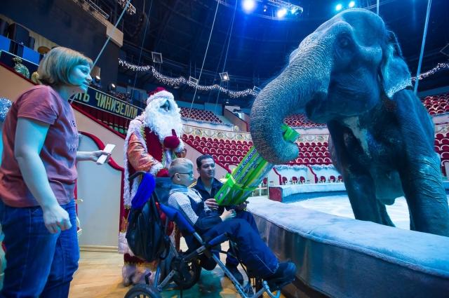 Подарок глебу вручил дрессированный слон.