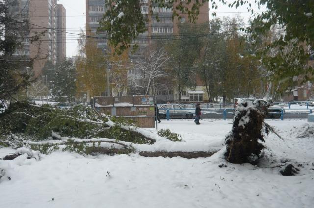 Снег выворачивает деревья с корнем.
