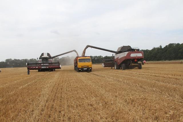 Качество пшеницы - хорошее.