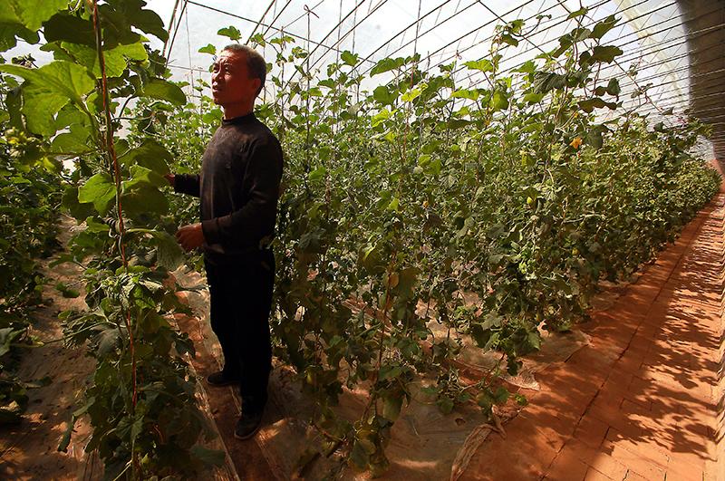 Яблоки раздора: как повлияет на магазины и покупателей запрет фруктов из Китая