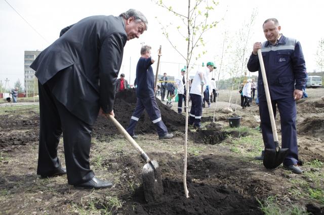 Руководитель района лично помогал сажать деревья.