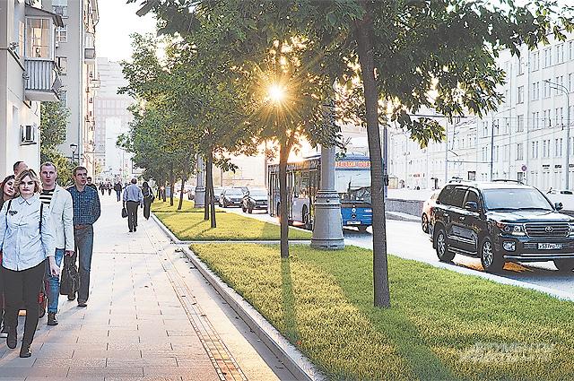 На улице Валовой теперь появилось множество деревьев.