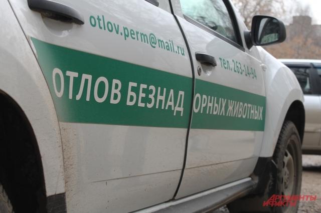 Служба отлова увозит животных в муниципальный приют.