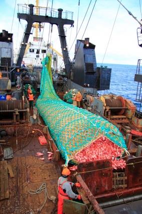 От качества трала зависит, насколько удачным будет труд рыбака. На этот раз улов - богатый.