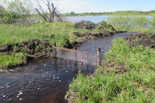Новое русло ведет воду в пруды охотхозяйства.