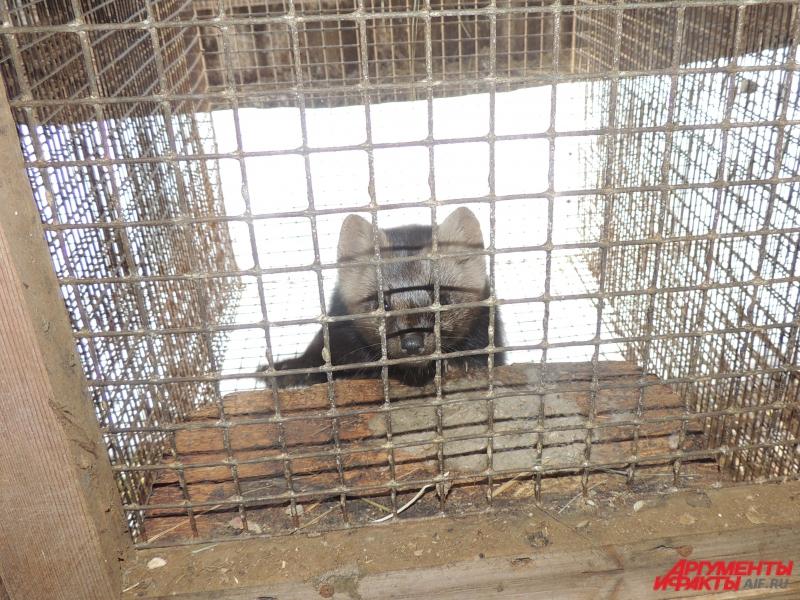 Арестованные животные страдают в своих клетках