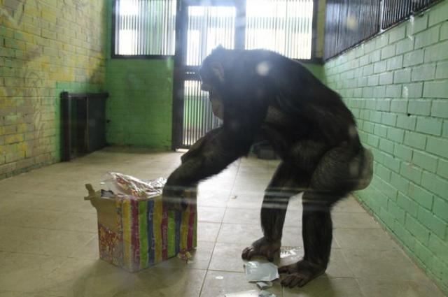подарок для обезьян