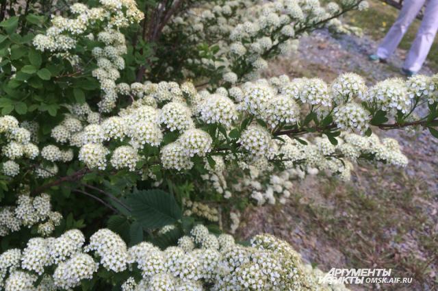 Туристы смогли увидеть множество цветущих растений.