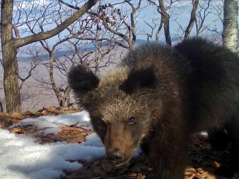 Медвежата-рекордсмены покорили сердца приморцев.