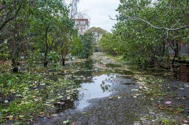 Вода распространилась по всему Ботаническому саду.