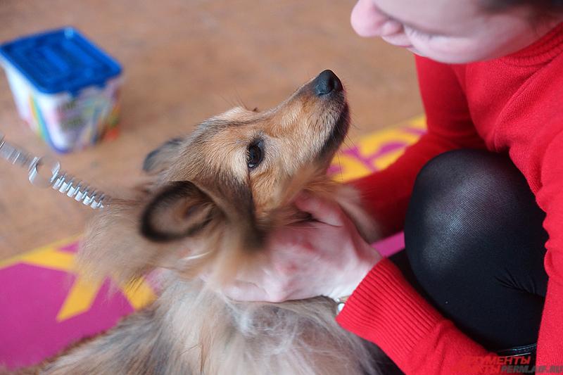 Маленькие пациенты сосредоточенно надевают кольца на шею собаки, нанизывают бусики, водят своих терапевтов на поводке, играют в мяч.