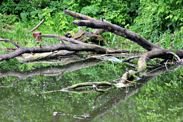 По реке неслись брёвна и целые деревья