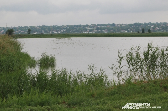 В прудах села Николаевка выращивают карпа, карася, судака и другую рыбу.