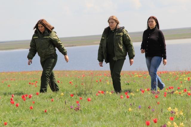 Дикие тюльпаны, к сожалению, исчезают, поэтому они занесены в Красную книгу России.