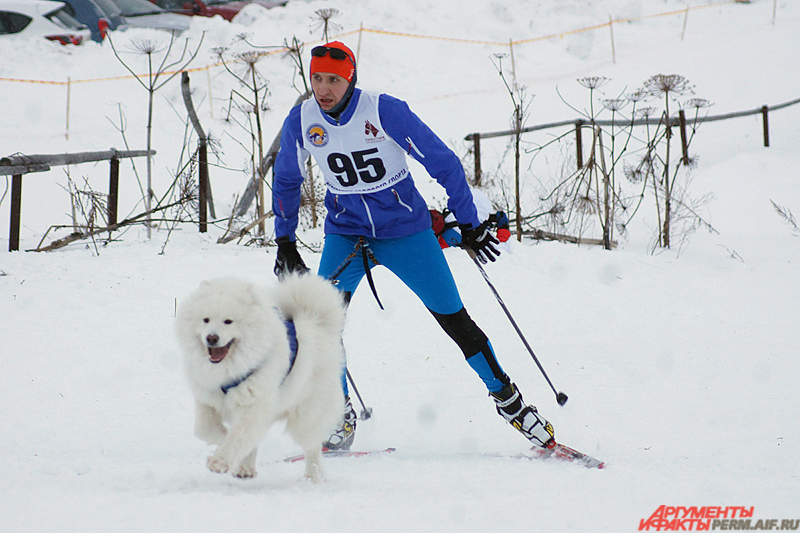 Участники выходили на старт как вместе с одной и двумя собаками, так и упряжками по 12 животных.