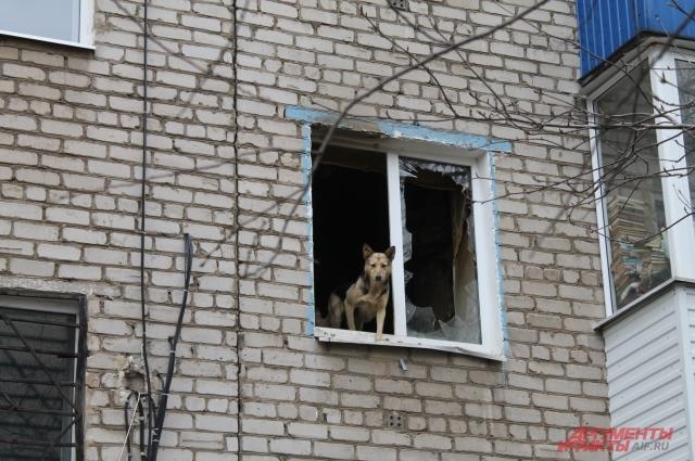 Собаки смотрят на улицу через разбитое окно