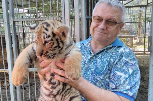 Сергей Писарев с очередным пополнением: в семье амурских тигров в этом году родились сразу шесть тигрят.