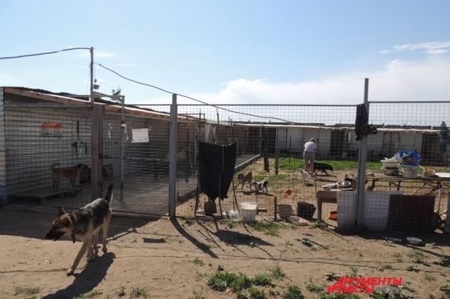 Помимо собак-пенсионеров, в приюте Дино также живут обычные брошенные псы и псы-инвалиды