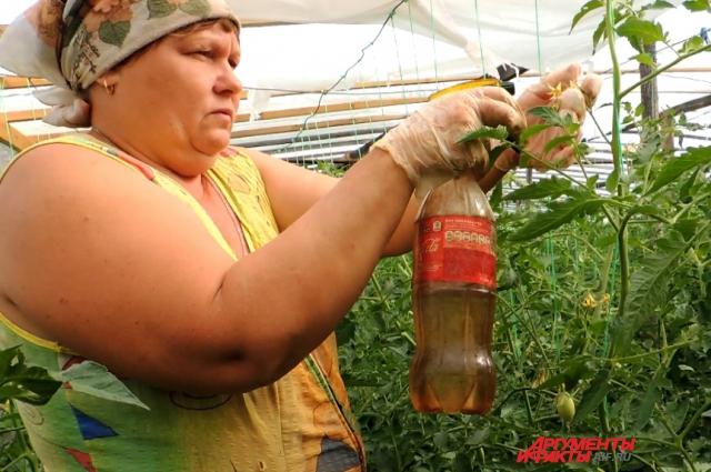 Так происходит искусственное опыление томатов
