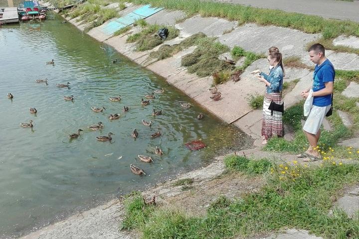 Мертвые утки не на шутку напугали посетителей парка Ветеранов в Вологде.