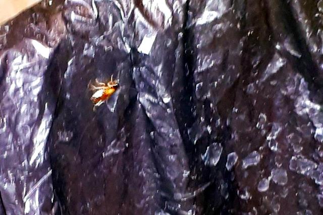 Если таракан голоден - он почувствует запах еды даже через железные двери.