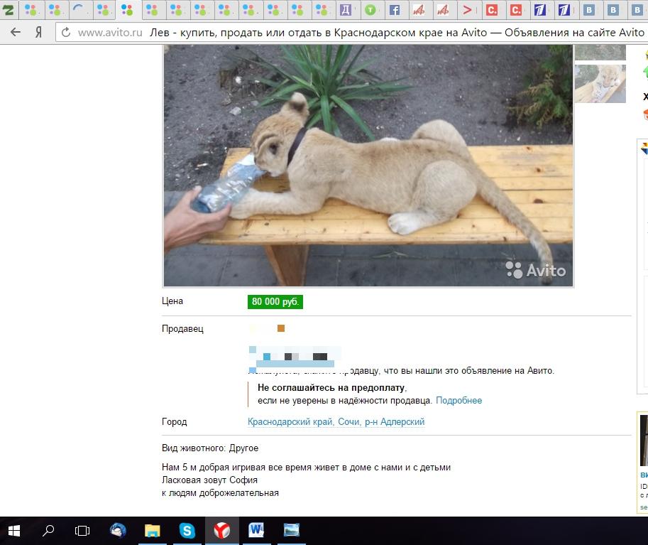 В Интернете можно найти множество объявлений о продаже львят.
