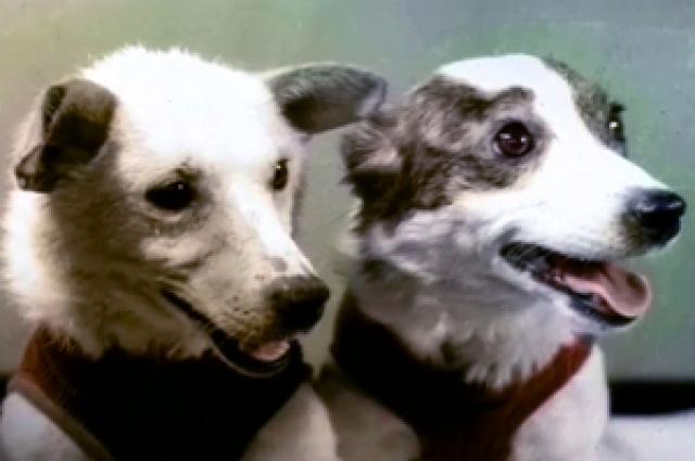 Белка и Стрелка стали первооткрывателями космоса.