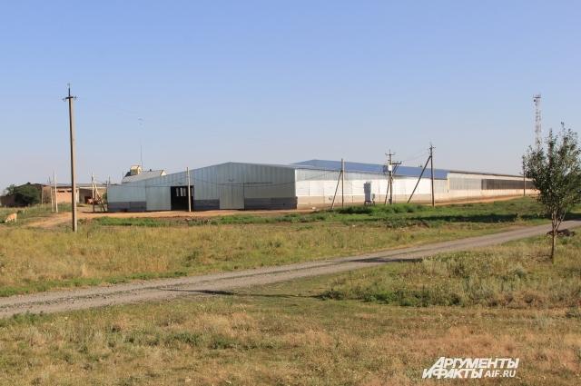 Зернохранилища заполнят новым урожаем 2017.