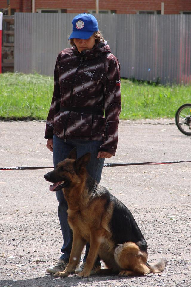 Из самого трудного пса может вырасти надежный друг.