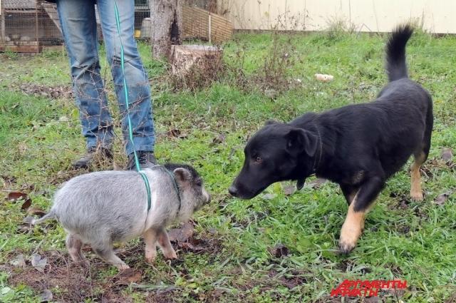 Пухля и пёс Харли.