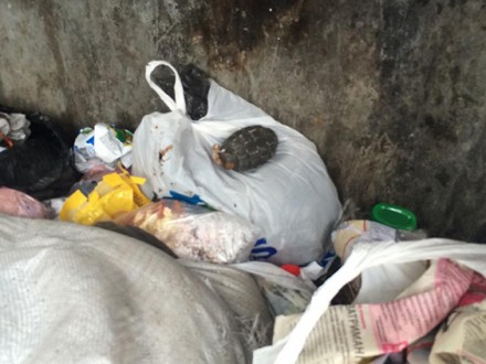 Граната в мусорке
