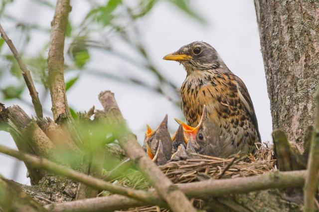 Опытный бёрдвотчеры различают птиц уже по трелям.
