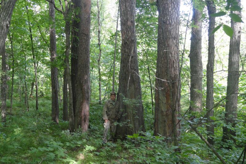 старомайнский лесхоз