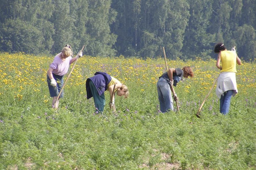 Работники в растерянности, что же будет с хозяйством дальше.