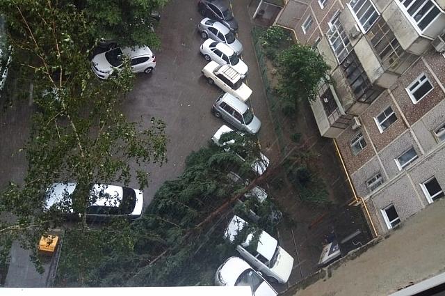 Дерево упало на припаркованные автомобили в одном из дворов мкр Юбилейного.