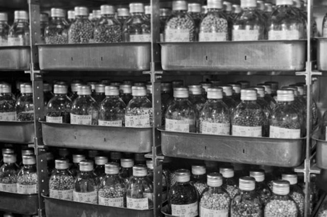 Национальное хранилище семян мировой коллекции растительных резервов, рассчитанное на 400 000 семян различных видов растений, на Кубанской опытной станции ВНИИ растениеводства.