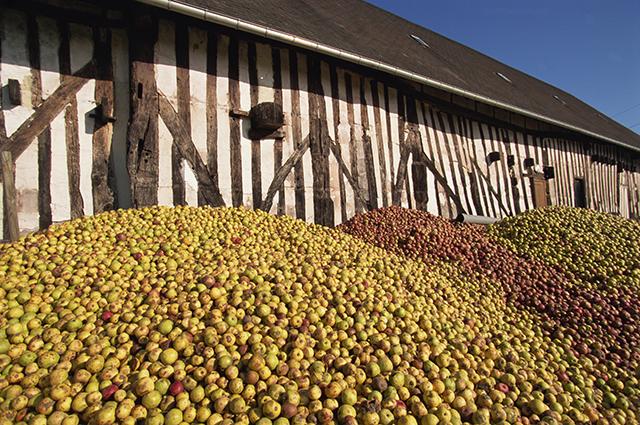 В отличие от вина, которое изготавливают только из одного сорта винограда, сидр делают из специальных наборов яблок разных сортов 4 групп