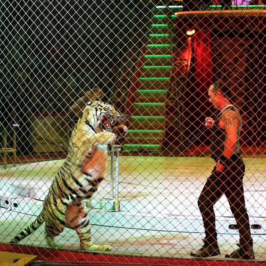 Алексей выходит к хищникам с голыми руками.