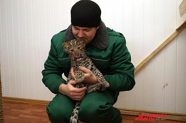 Сергей с леопардом Олимпиадой