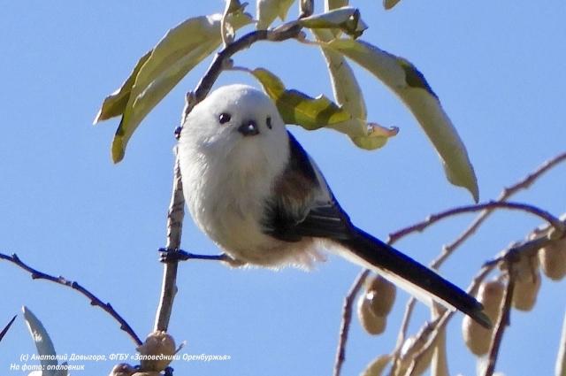 По информации специалистов, список птиц участка «Предуральская степь» расширился с 80 до 114 видов.