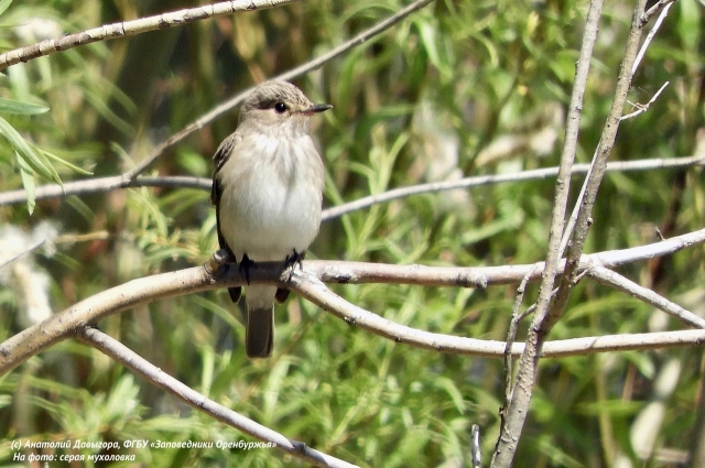 В Красные книги разных рангов внесли 17 видов из числа встречающихся на участке птиц.