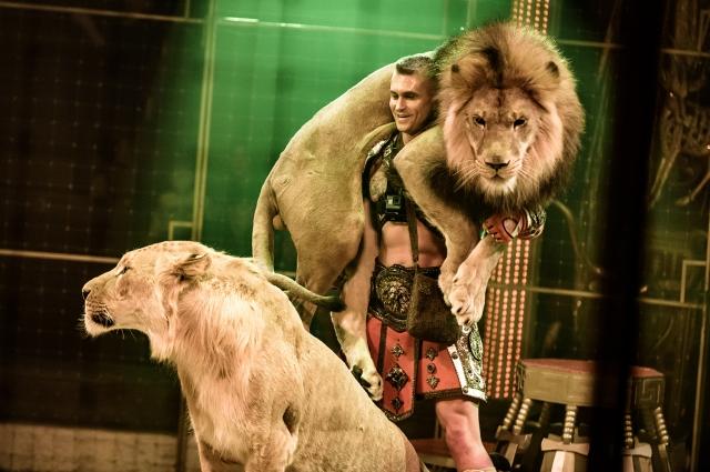 Дикие львы и тигры особенно впечатлили иркутян.