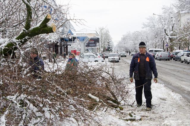 Поваленные снегом деревья