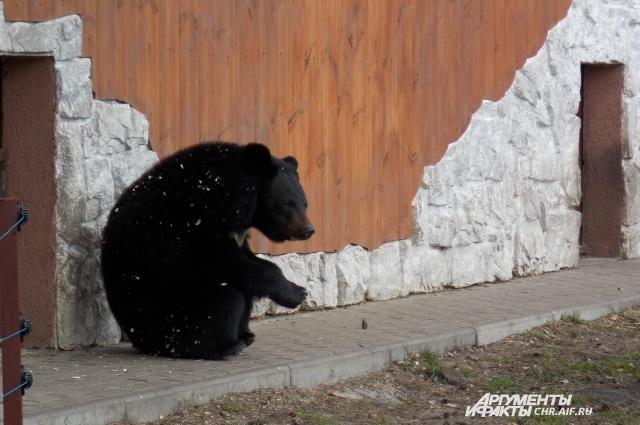 Гималайская медведица Майя