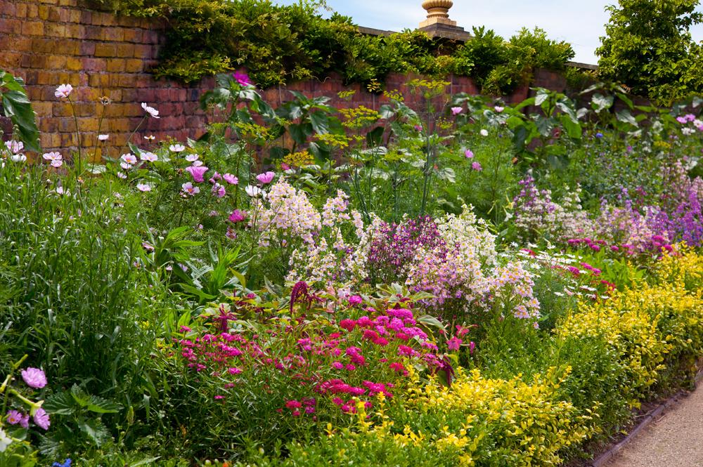 Простые полевые цветы – залог красоты, не требующий чуткого ухода.