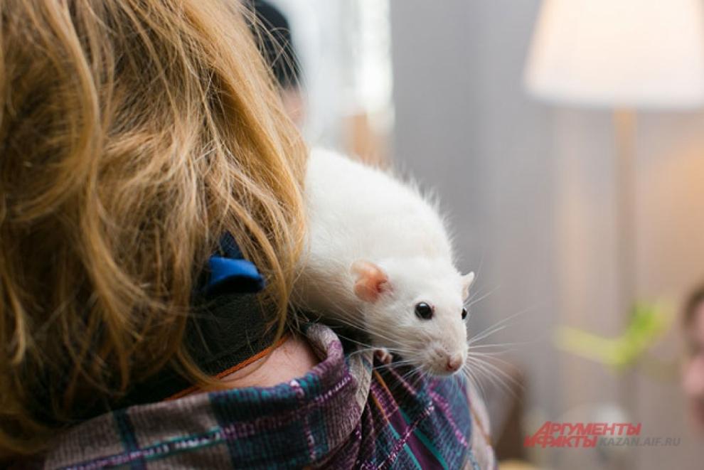 Белая крыса - символ 2020 года.