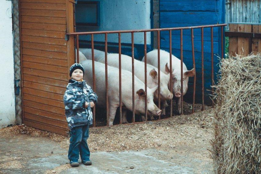 Сейчас секреты работы на ферме перенимает младшее поколение.